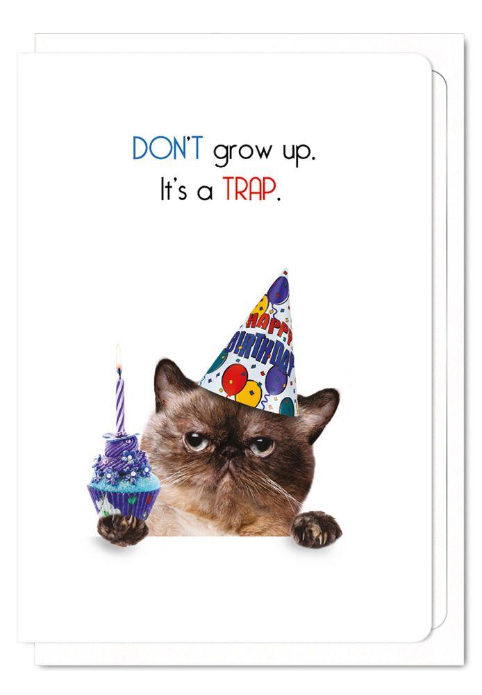 Funny Cat Birthday Card Cat Lover Cake Greeting Humorous Grumpy Cat Cards Blank Ezendesigns Birthdaya Cat Birthday Cards Funny Cat Birthday Card Cat Birthday