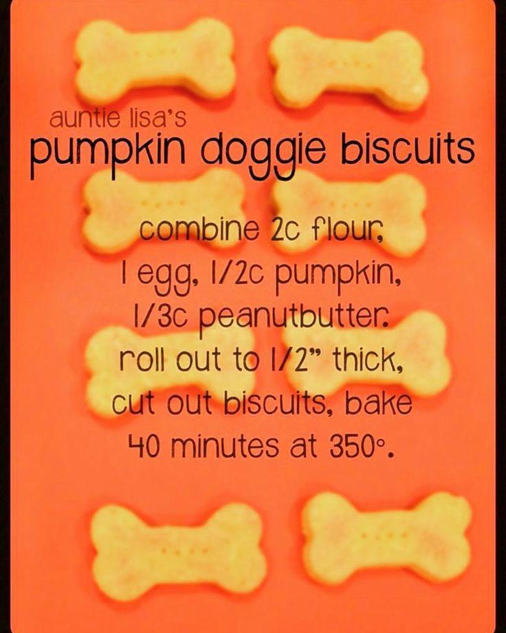 Delícia!😜 #biscoitopet  #biscoitodog  #biscoitodogs  #alimentacaopet  #abobora  #pumpkin  #pumpkins  #biscoitos #biscuits  #biscuit  #biscuitpet  #dogs  #caes  #pets