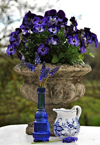 Violas in Mini Urn