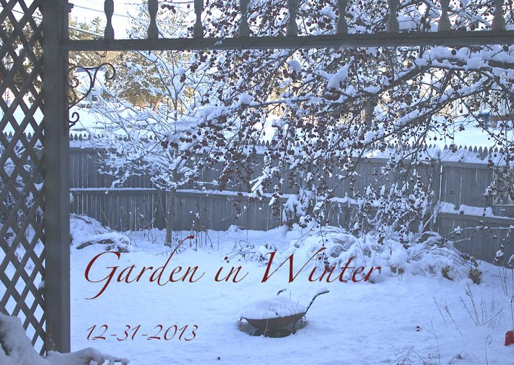 Winter's Garden