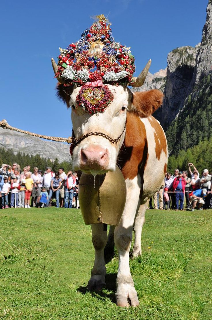 Il ritorno del bestiame dall'alpeggio Almabtrieb  www.valgardena.it