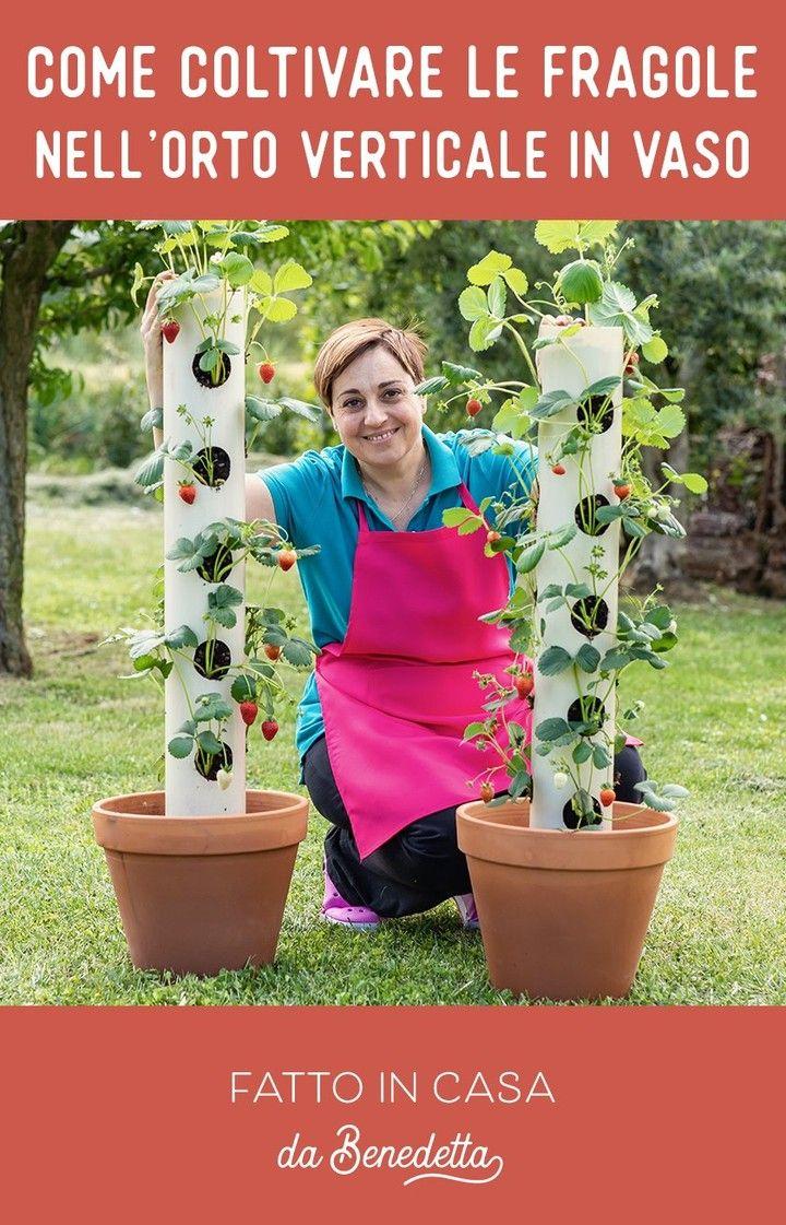 Fiori Da Piantare Nell Orto pin su piante e fiori