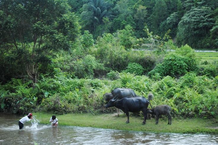 Porsea, North Sumatera. By Ludi Hasibuan