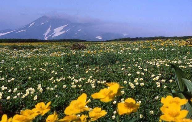 五色ヶ原・沼ノ原~トムラウシ山