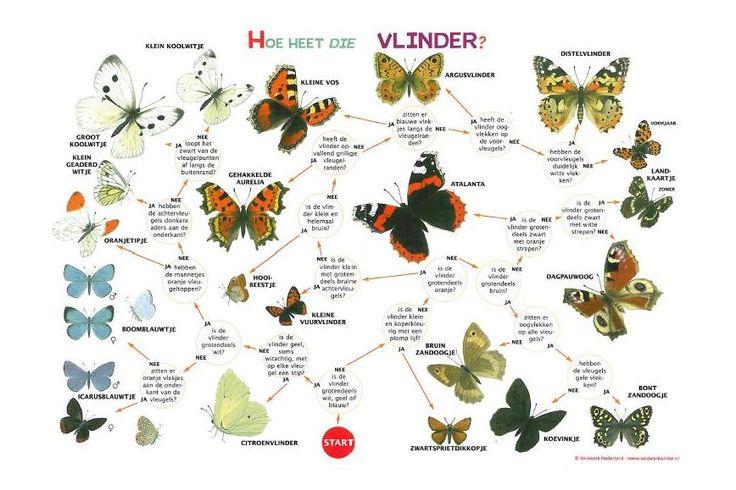 vlinders zoekkaart.JPG 868×579 pixels