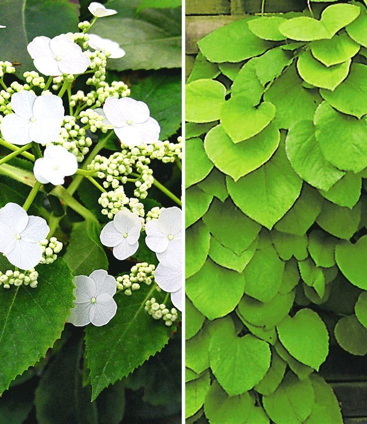 ehrfurchtiges typische herbstblumen und graser die den garten der kuhleren saison schmucken Inspiration Abbild und Cfefffceafaaababb Green Garden Carport Jpg
