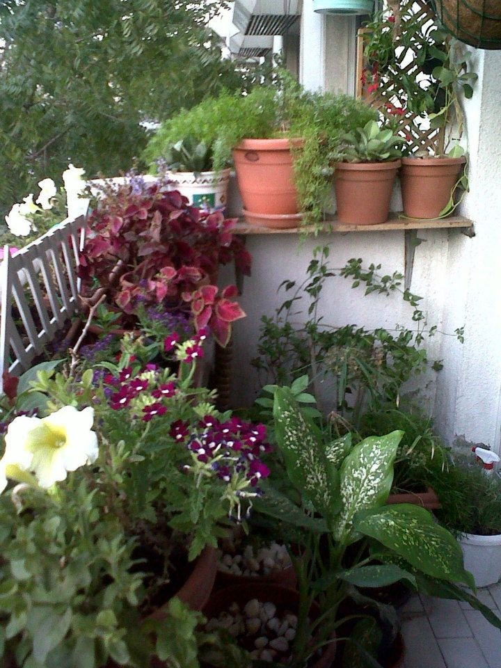 39 best images about balcony garden on pinterest dubai for Domestic garden ideas