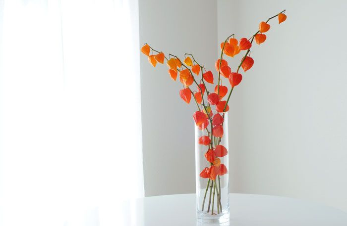 Chinese lantern plants might be great in floral arrangements!