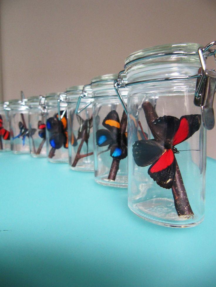 Wekpotten met Callicore vlinders. Kijk voor meer vlinders op www.Brudante.com