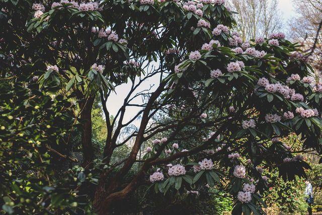 loki schmidt botanical garten