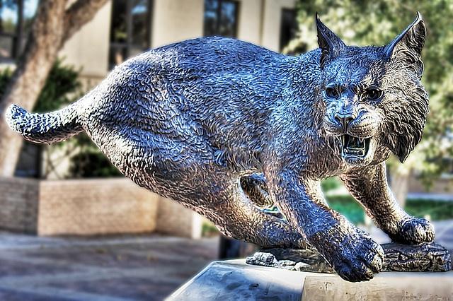Texas State Bobcat by Frank Jaquier, via Flickr #SMTX #TXST