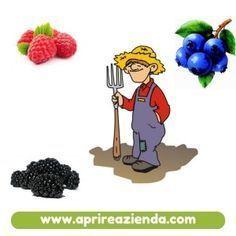 Come avviare una coltivazione di frutti di bosco reddittizia. Coltivare fragole selvatiche. Coltivare mirtilli. Fragoline di bosco. Lamponi. More.