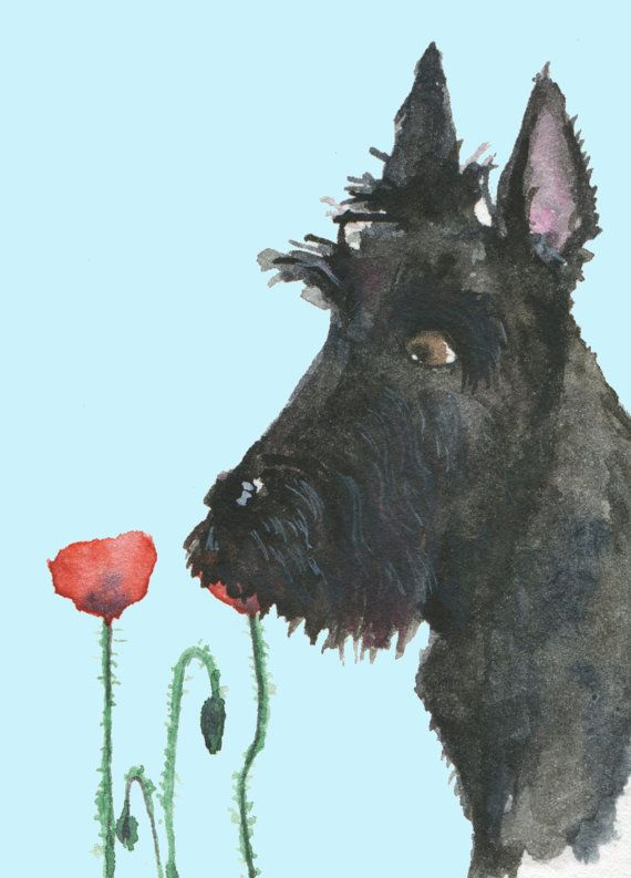 118 best Scotty dogs images on Pinterest | Scottish terriers ...