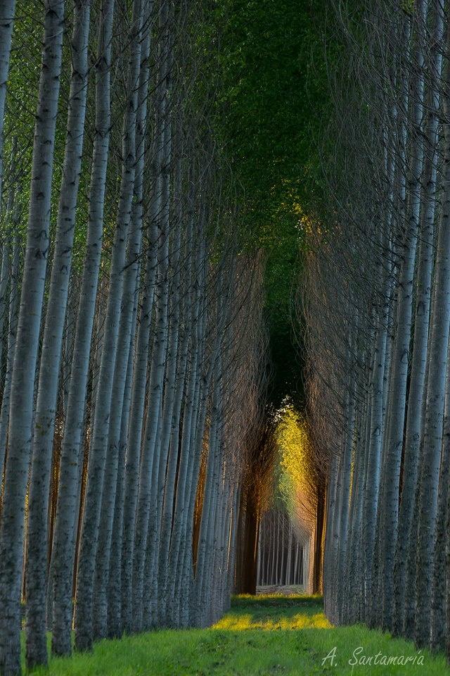 Bosque de Alamos,Parral Chile