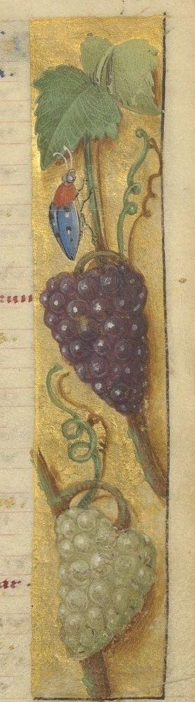 Livre d'heures, en latin Date d'édition : 1501-1525 Type : manuscrit Langue : latin