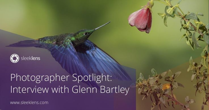 Welcome to another photographer spotlight interview! Glenn Bartley is a wildlife photographer from Canada. Get to know all his tips and tricks!