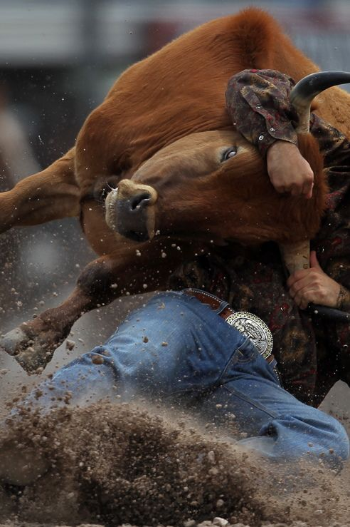 A little steer wrestling will always cheer you up.