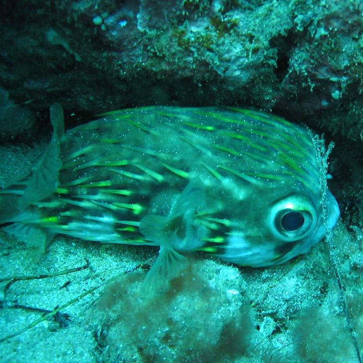 #cute #fish #ocean
