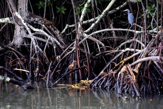 --- Derrame de petróleo contamina laguna en Tabasco --- .   Un reporte completo del diario mexicano Reforma sobre la contaminación petrolera en la zona costera de Tabasco.