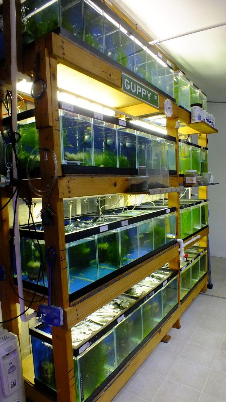 Fish aquarium market in delhi - Aquarium Shelf Google Search