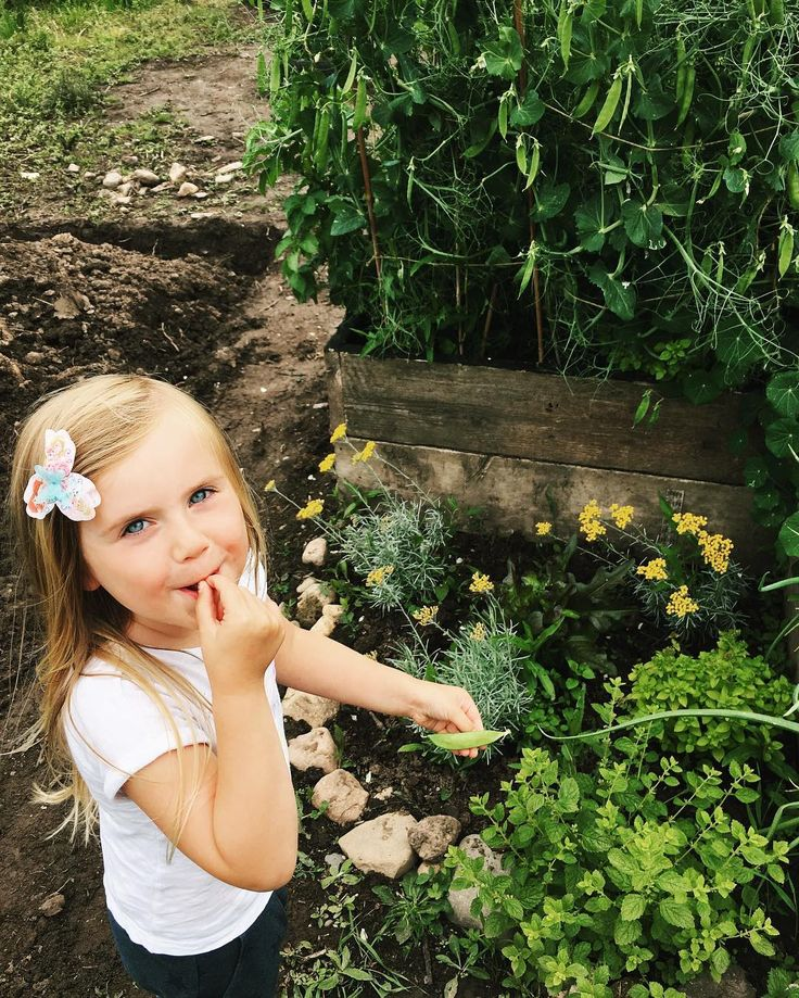 http://ift.tt/1WN4nft Her main reason for helping water the plants - eating peas fresh from the plant! I've written a bit on the blog about our first veggie patch the links in my profile . . . .  #lovelifeoutside #lovelywanderings #curiouslittleexplorers #simplesummerpleasure #livefolk #theartofslowliving #childhoodunplugged #childofig #simplychildren #worldoflittles #umh_kids #littlefierceones #mom_hub #thesearethedays #our_everyday_moments #candidchildhood #illuminatechildhood…