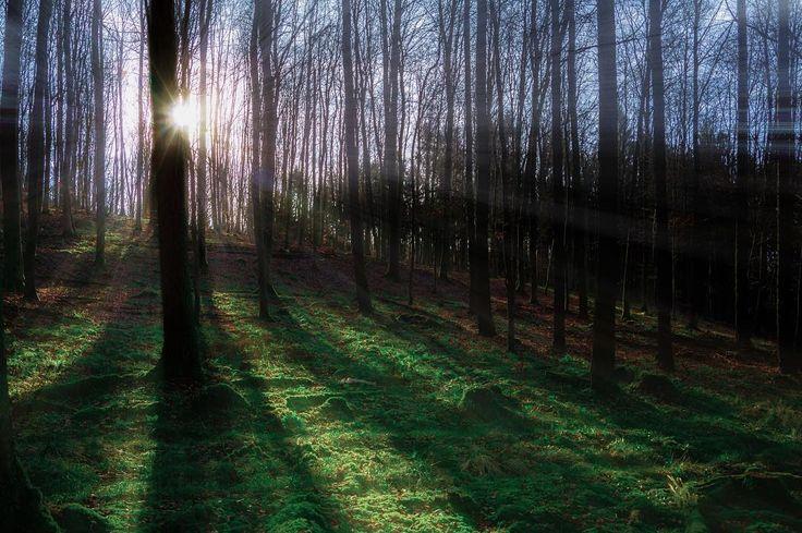 Fata viam invenient....Happy weekend friends have a good one #vzcomood #transfer_visions #tree_magic #folkmagazine #ic_trees #treescollection #rsa_trees #ig_deutschland #igersgermany #missing #timeoutsociety #ig_myshot #igmasters #nikonphotography #ig_worldclub #fingerprintofgod #instagram by goetzkeller
