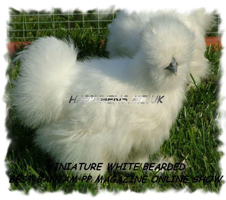 Twist- Fluff on horses fetlock....  to fluffy chicken