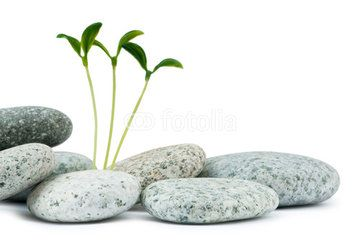 Pebbles and seedlings - alternative medicine concept