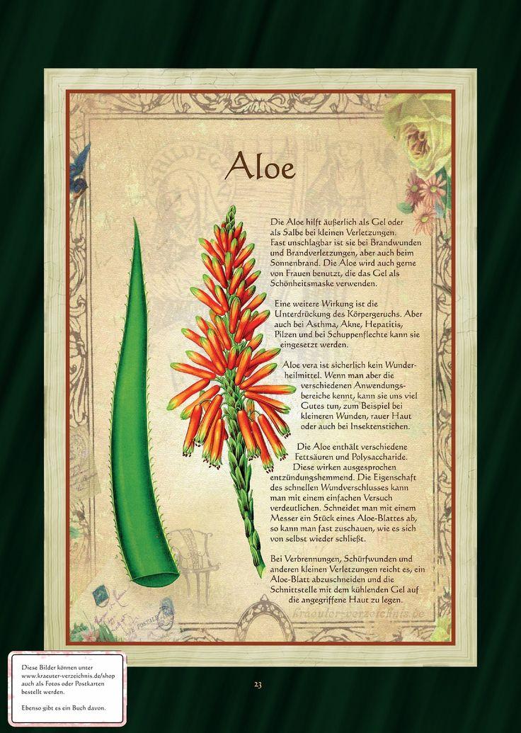Die Aloe als Frauenkraut