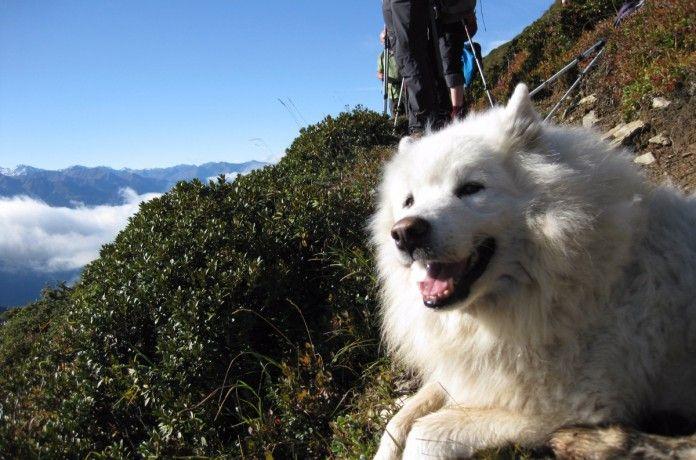 Urlaub mit Hund und Katze im Lechtal, Tirol - Österreich (c) Gasthof Bären