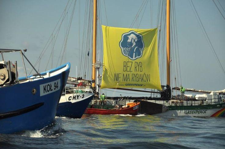"""Dwumasztowy jacht Greenpeace """"Beluga"""" w otoczeniu flotylli łodzi rybackich."""