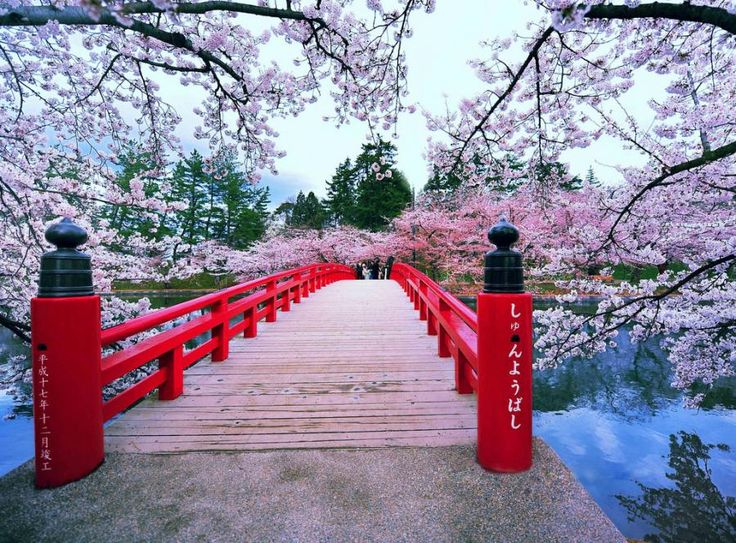 hirosaki park japan places id like to go pinterest japan and bridge - Japanese Garden Cherry Blossom Bridge
