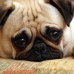 Ovo su najčešće bolesti kod pasa!