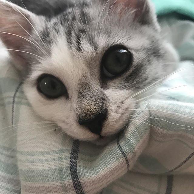 お昼寝🐱#愛猫#子猫#猫#ネコ#ねこ#にゃんこ#cat #ねこ部#みんねこ#猫好きさんと繋がりたい #ねこのいる生活 #ねこすたぐらむ #にゃんすたぐらむ #可愛い#かわいい#ねこじゃらし#cute#癒し#Instagram #instagood #followme #followmenow#photooftheday #verycute #baby #photography #suzuka #Japan#photo#animal