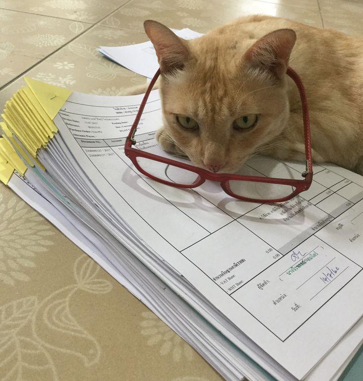 ช่วยคุณหนูทำงาน #สีนวลแมวหล่อ