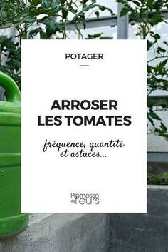 l 39 arrosage des tomates comment faire jardin legumes pinterest potager potager tomates. Black Bedroom Furniture Sets. Home Design Ideas