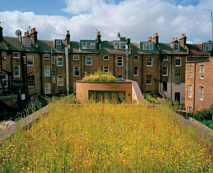 www.organicroofs.co.uk   London rooftop wildflower meadow, architect Justin Bere, photo by Diane Cook & Len Jenshel. http://ngm.nationalgeographic.com/2009/05/green-roofs/cook-photography