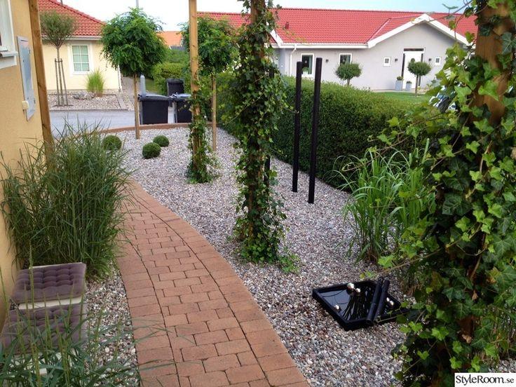 trädgård,elefantgräs,buxbom,murgröna,pergola