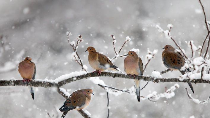природа животные птицы деревья зима снег