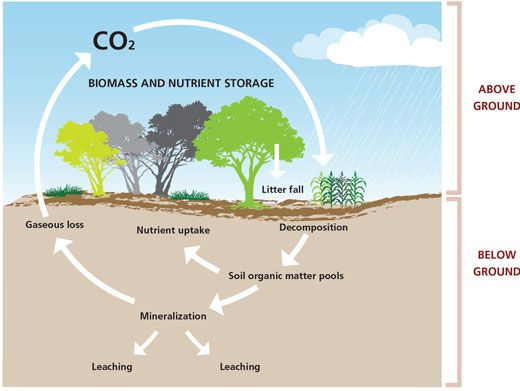 Carbon sink areas of vegetation that absorb carbon for 0 4 soil carbon