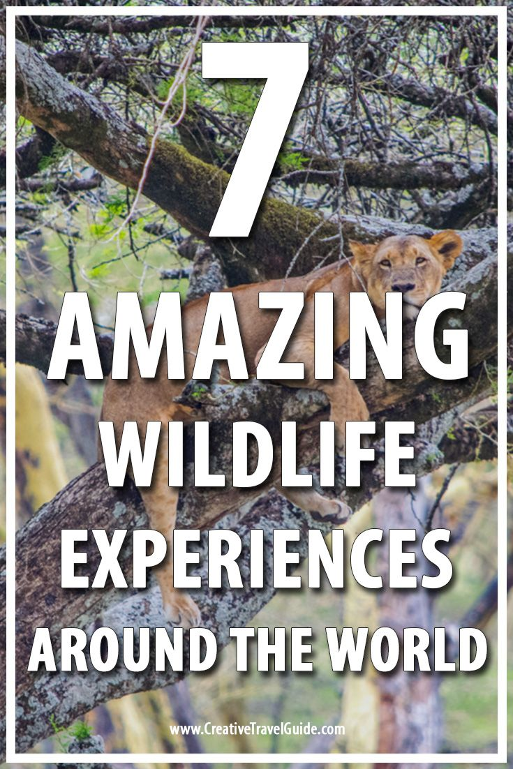 One of the best things about travel is experiencing the amazing wildlife of the word. Here are 7 of the best wildlife experiences around the world.