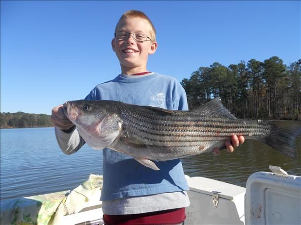 17 best images about fish pics on pinterest lakes blue for Striper fishing nc