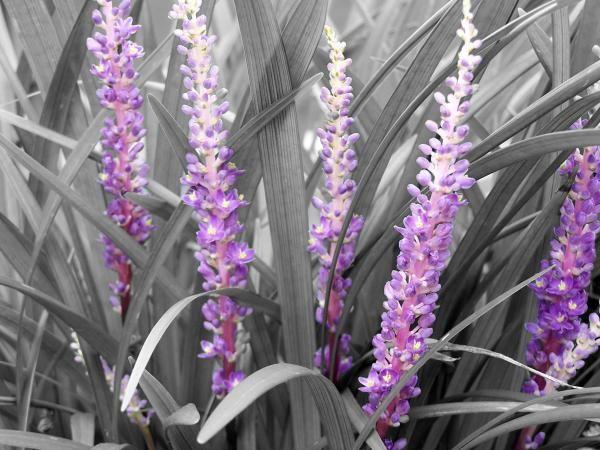 Color Accent 58 best black & white w/ color accents! images on pinterest