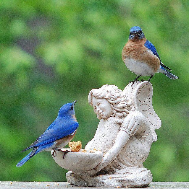 Bluebirds & fairy angel feeder
