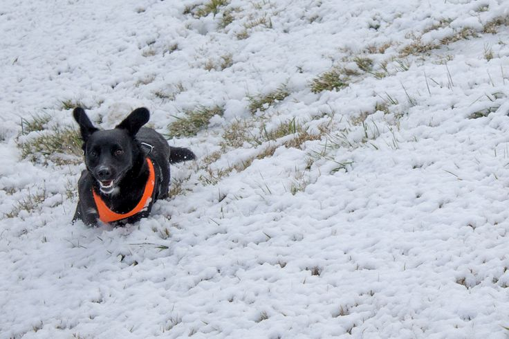 "Echa un vistazo a mi proyecto @Behance: ""Snow, Dogs and Palm Trees"" https://www.behance.net/gallery/54804133/Snow-Dogs-and-Palm-Trees"