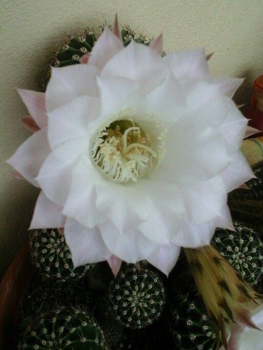 Seconda fioritura