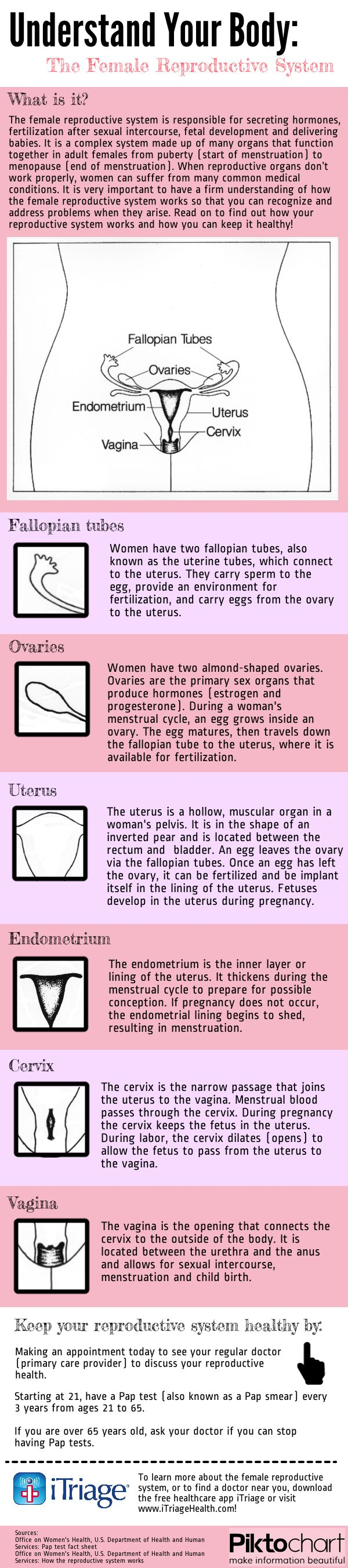 In honor of Cervical Health Awareness Month, iTriage created this infographic about the female reproductive system. In 2009 alone, 84,155 women in the United States were diagnosed with a gynecological cancer, and 27,813 women died from a gynecological cancer, according to the Centers for Disease Control and Prevention (CDC). Read this infographic to learn more ...