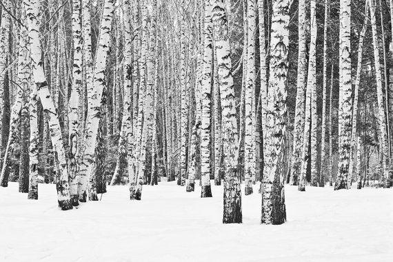 Birch tree wallpaper repositionable peel & stick by StyleAwall