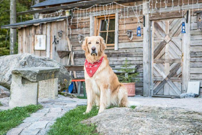 Urlaub mit Hund in Deutschland - Bayern: Hundefreundliches Hotel & tierische Aktivitäten. Tierischer Urlaub im Bayerischen Wald (c) Natur-Hunde-Hotel Bergfried