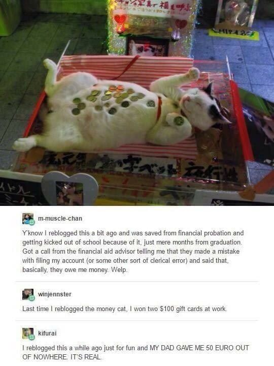Reblog the money cat. Probably not real but not harm in trying... plus I love cats <3